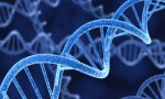 Gene deletion may shed new light on the development and progression of autism. Credit: creativecommons.org