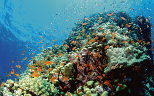 Fish around a coral reef.Credit@carbonbrief.org